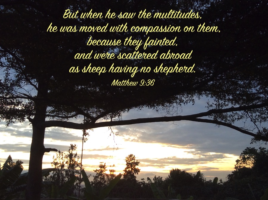 Matthew9 36